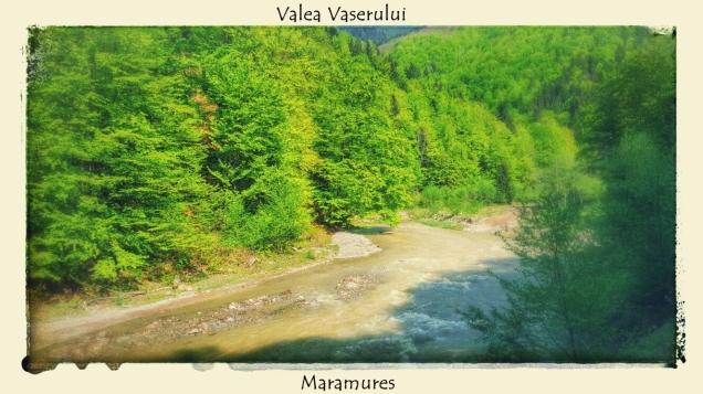 Valea Vaserului plimbare cu mocanita