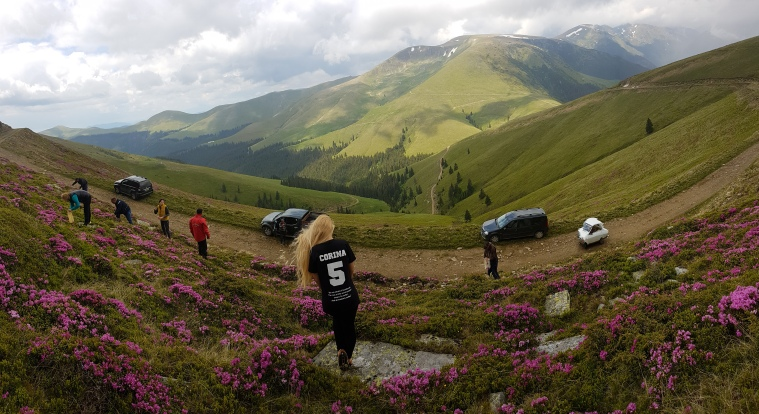bujorul de munte in Muntii Fagaras