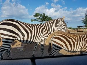 unde poti sa faci safari in Europa