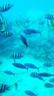 ce poti vedea la snorkeling in Hurghada