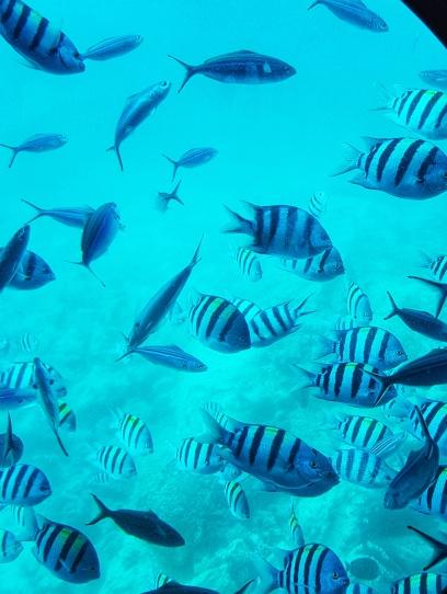 cea mai frumosa experienta din Hurghada plimbare cu submarinul