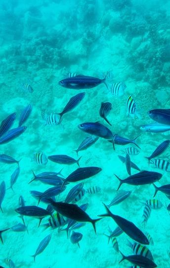 multitudine de pesti colorati in Marea Rosie Hurghada