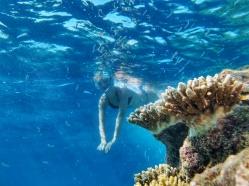 ce e de vazut in Maldive reciful de corali