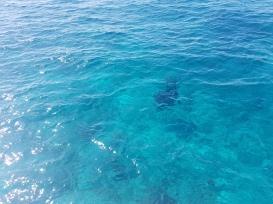 ce sa vezi in Maldive manta rays