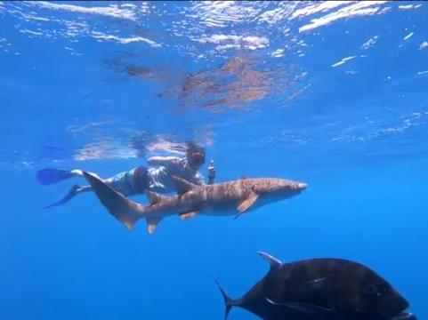 cea mai tare experienta din Maldive inot cu Nurse Sharks