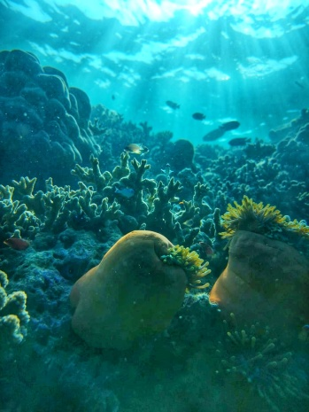 corali Oceanul Indian Maldive