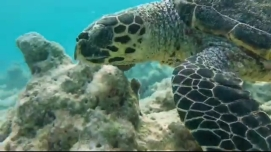 Maldive atractii turistice inot cu broastele testoase