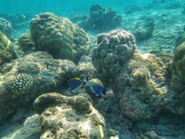 pesti colorati snorkeling Maldive