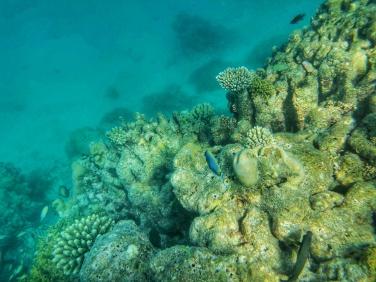 reciful de corali Maldive
