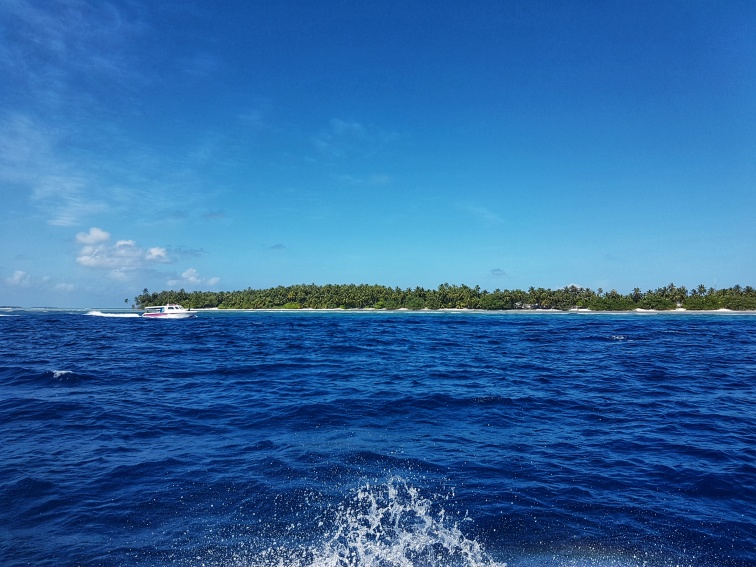 searching for the whale shark in Maldives