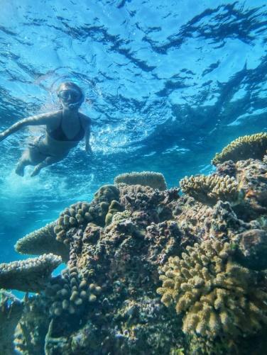 table corals Maldives (1)