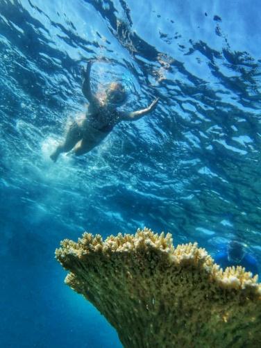 table corals Maldives (2)