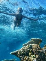 table corals Maldives (5)