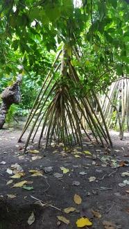 copacii Pandanus care au rădăcinile aeriene