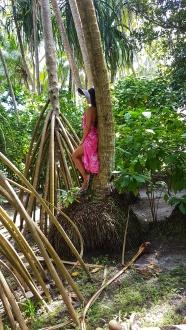Fihalhohi Island Resort luxuriant vegetation