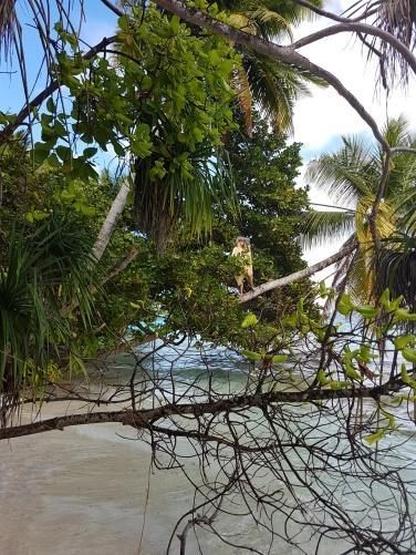 happy girl in a coconut tree in Maldives