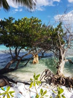 luxuriant vegetation surrounded by the blue ocea in Fihalhohi Island Resort Maldives