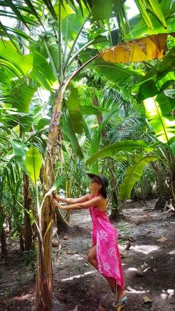 padurea tropicala in Maldive