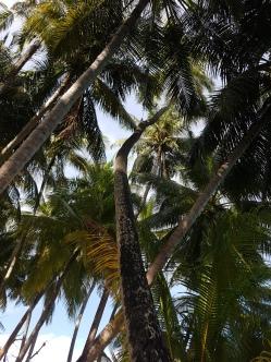 palmtrees Maldives Fihalhohi Island Resort