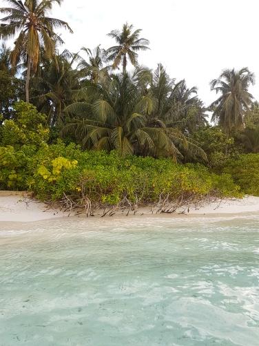 scaevola taccada on a beach in Maldives