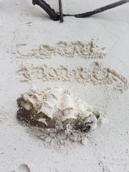 shells in Maldives