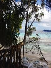 starcul griu in Maldive