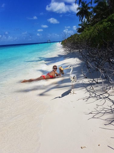 the most beautiful beach in Madlives with crystal clear water white sand and heron bird